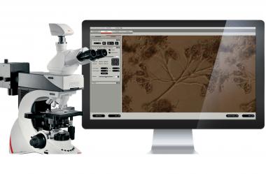 Como elevar o desempenho da sua estação de tratamento de efluentes com a análise microscópica do lodo